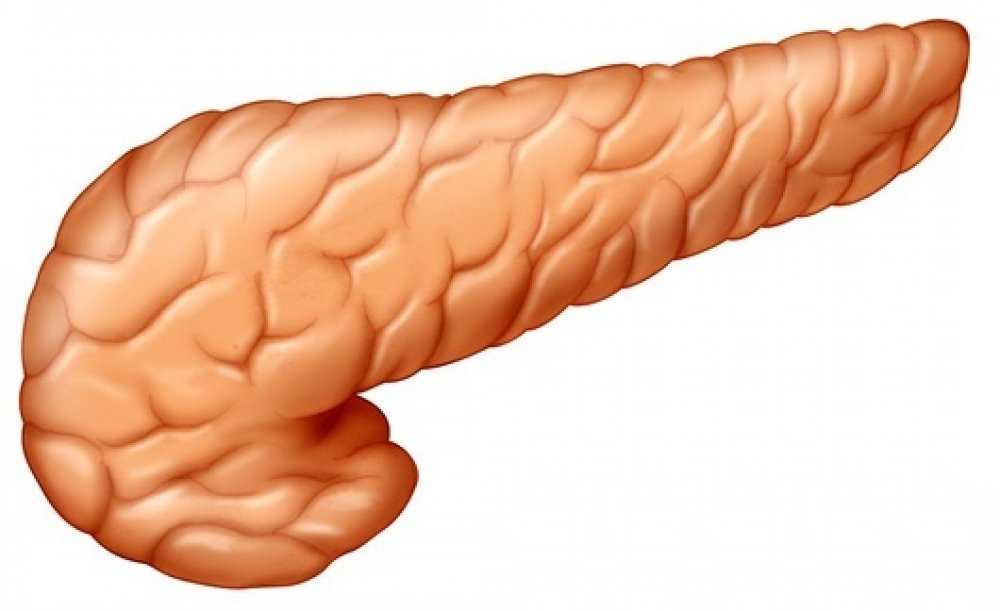 Pancreas-Pictures-3